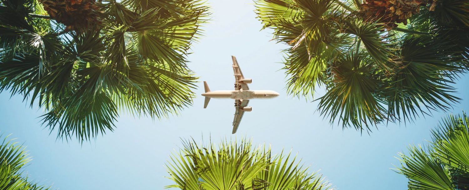 Plan flying over palm trees.