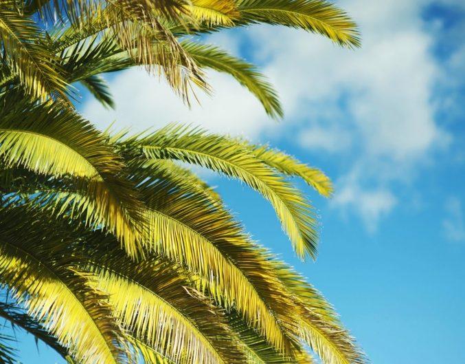 Palm tree by the sky.
